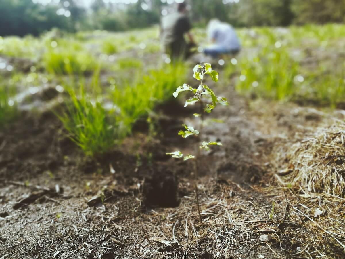 Bransoletki ze sznurka, które sadzą drzewa – zobaczcie jak rośnie posadzony przez Was las!-min (1)