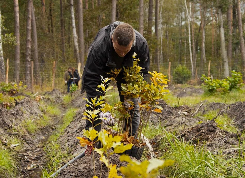 Plantwear dla natury kolejne 1000 drzew za zdjęcia-min