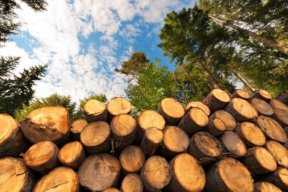 drewniane zegarki plantwear (1)