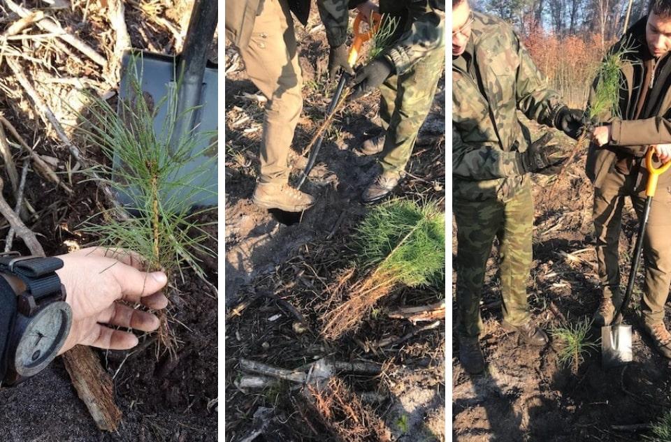 plantwear sadzenie drzew
